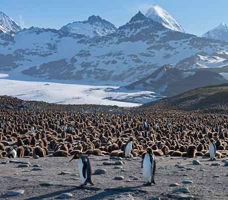 极地动物摄影作品精选